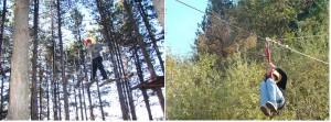 top-tree-park