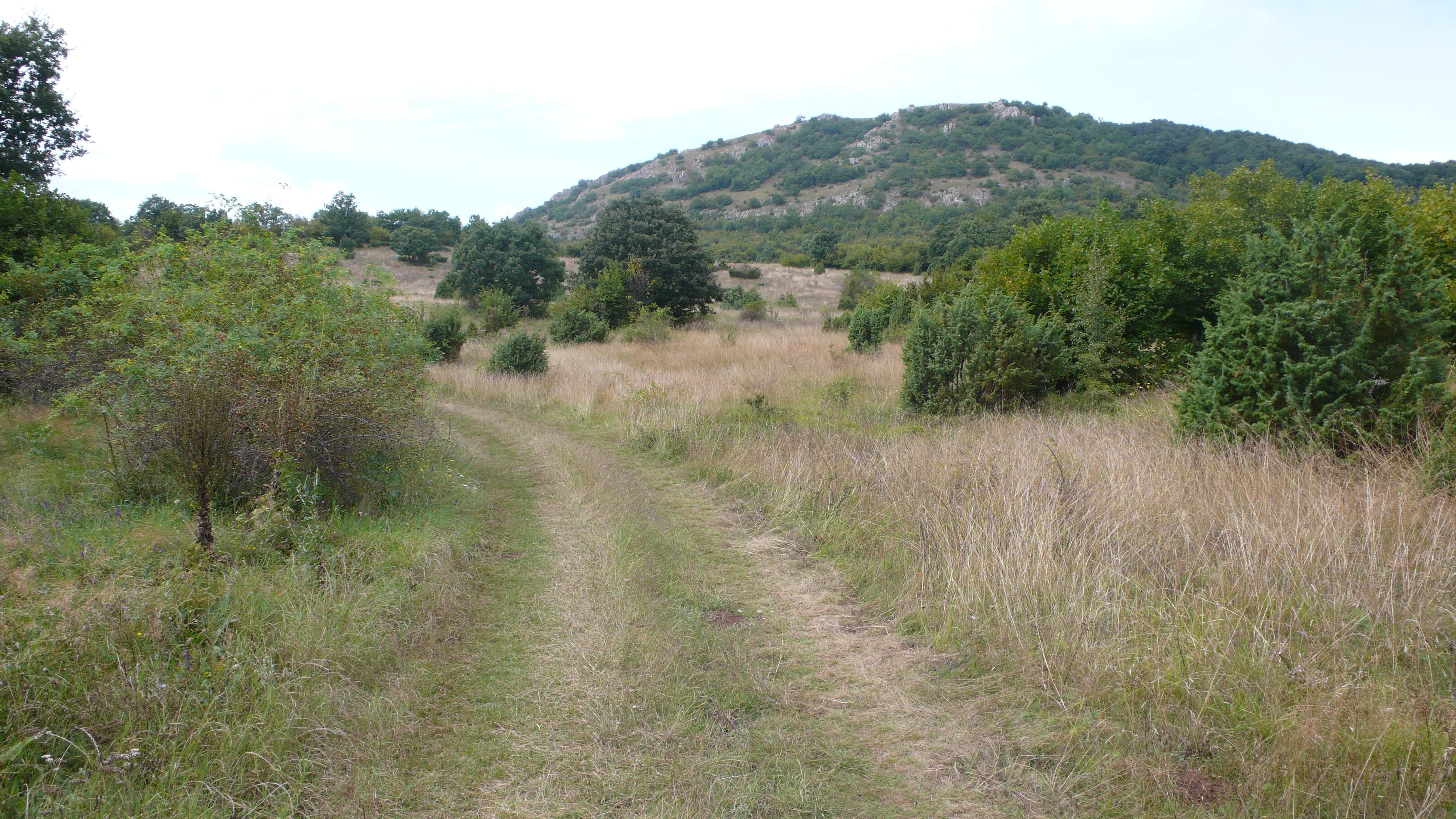 Lozen mountain meadow