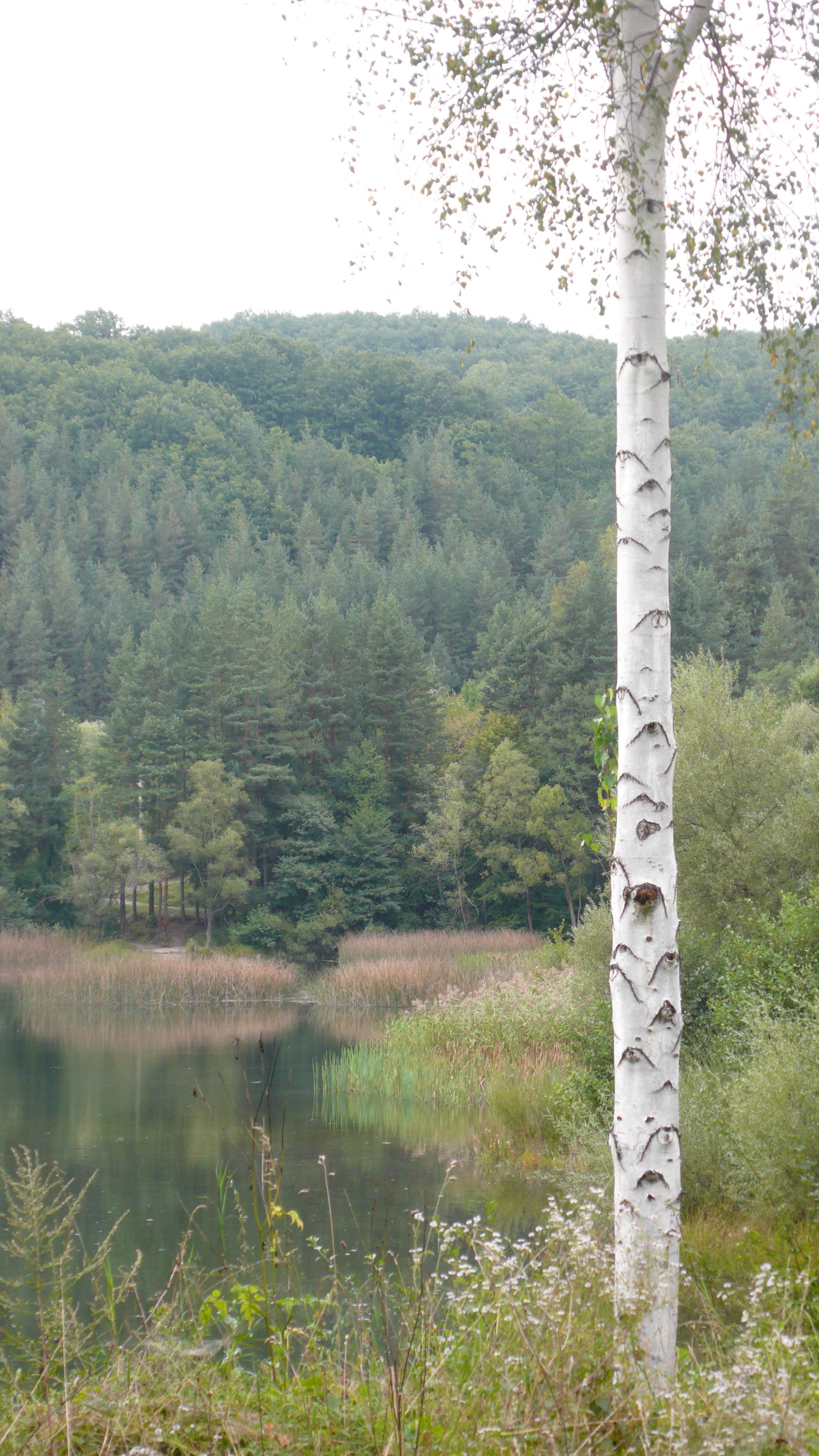 lake in paradise