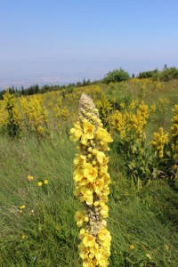Едно от хубавите неща на планините е, че там пролетта се удължава до средата на август.