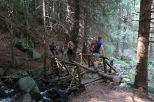 Ходене с елементи на оцеляване - освен изобилие от паднали дървета, пътеката от х. Алеко към с. Бистрица предлага и полуразрушени мостчета... А уж трябваше да е ден за загрявка!